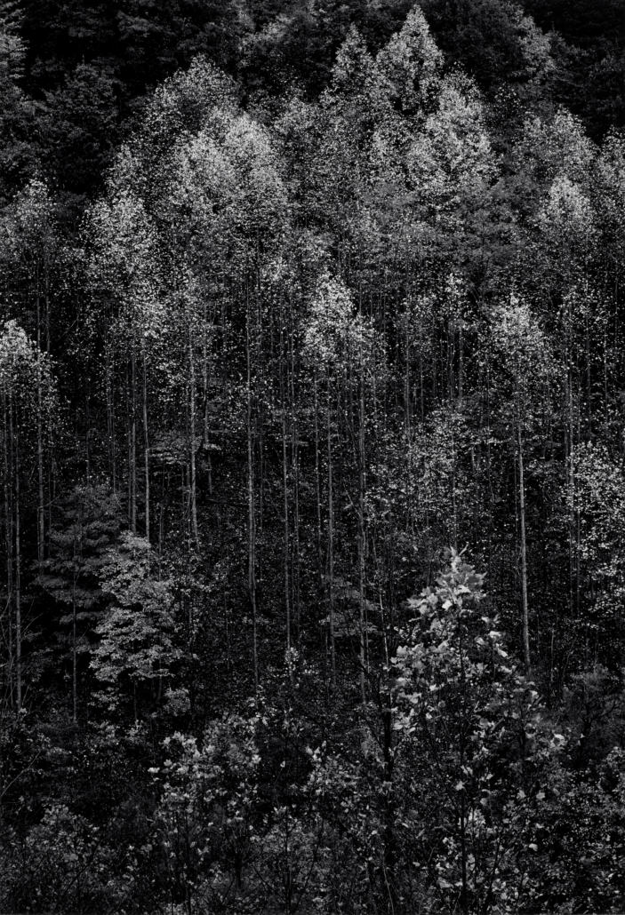Ansel Adams, 'Autumn, Great Smokey Mountains National Park, Tennessee,' est. $15,000-$25,000. Image courtesy of Bonhams